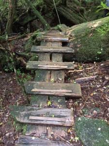 Steps, Yakusugiland, Yakushima, Japan 2016